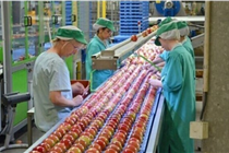 震撼现场:英国生鲜加工配送中心