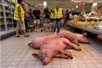 法国农民赶着活猪进超市 抗议肉价下跌