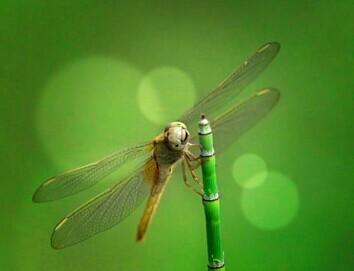 泸州老窖这支最新广告被拍成昆虫世界