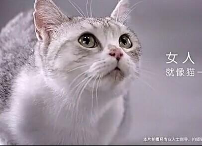 高洁丝病毒视频之猫咪篇 亲柔无忧最重要